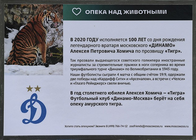 ФК «Динамо-Москва» взял под опеку амурского тигра